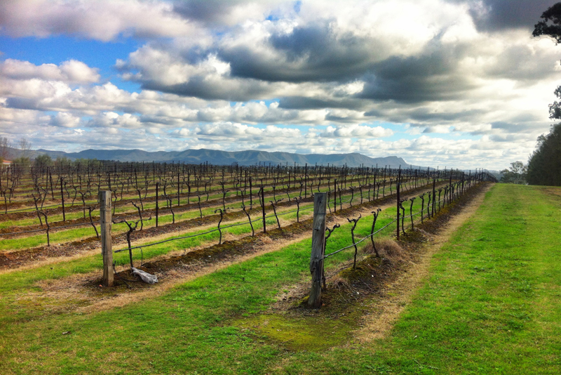 Adina Vineyard Hunter valley